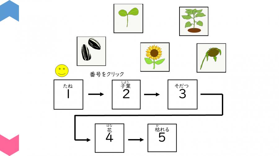 05004[理科]植物の育つ順番を確認しよう